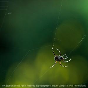 015-spider-ankeny-10sep16-12x12-006-5632