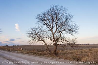 015-tree-ankeny-21mar21-12x08-008-400-0208