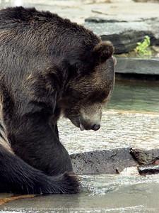 015-bear-nlg-ndg-001-8012