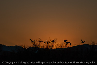 015-sunset-bosque_del_apache_nm-01dec06-12x08-008-350-9872