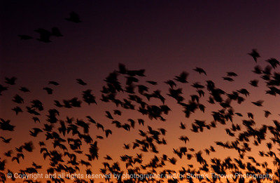 birds-bosque_del_apache_nm-02dec06-3147