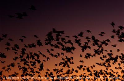 birds-bosque_del_apache_nm-02dec06-3147