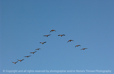 birds-bosque_del_apache_nm-01dec06-3145