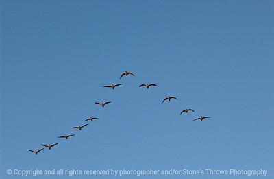 birds-bosque_del_apache_nm-01dec06-3145