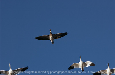 birds-bosque_del_apache_nm-01dec06-3095