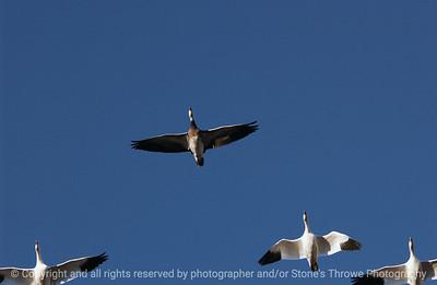 birds-bosque_del_apache_nm-01dec06-3095