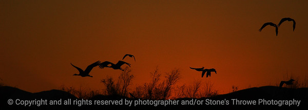 birds_sunset-bosque_del_apache_nm-01dec06-cut1-9883