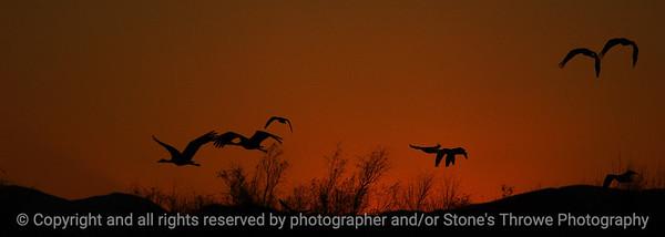 birds_sunset-bosque_del_apache_nm-01dec06-cut1-9883