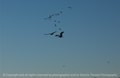 birds-bosque_del_apache_nm-01dec06-3136