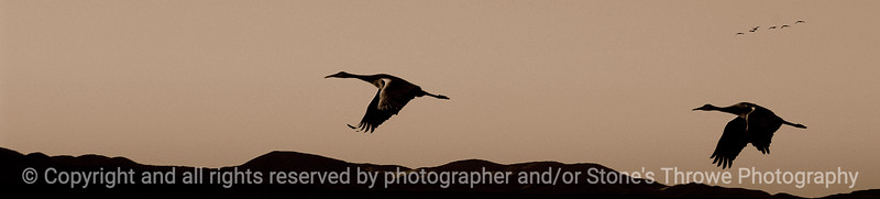 birds-bosque_del_apache_nm-01dec06-3133