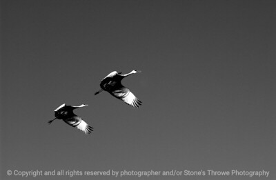 birds-bosque_del_apache_nm-02dec06-3216