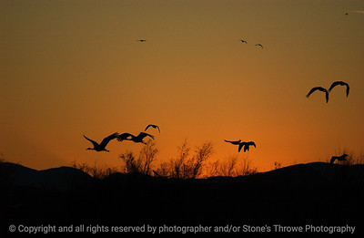 birds-bosque_del_apache_nm-01dec06-9883