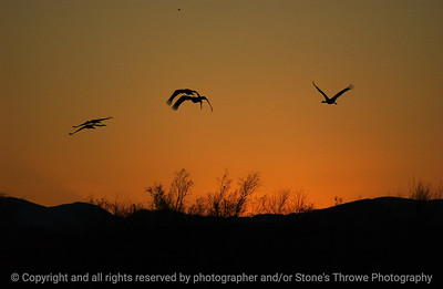 birds-bosque_del_apache_nm-01dec06-9884