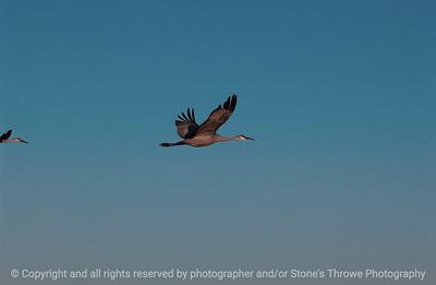 birds-bosque_del_apache_nm-01dec06-3138