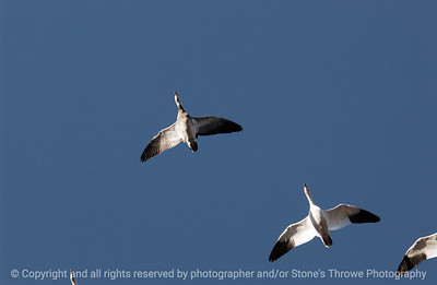 birds-bosque_del_apache_nm-01dec06-3096