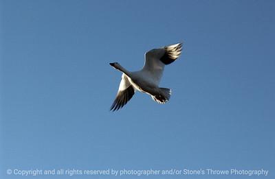 birds-bosque_del_apache_nm-01dec06-3109