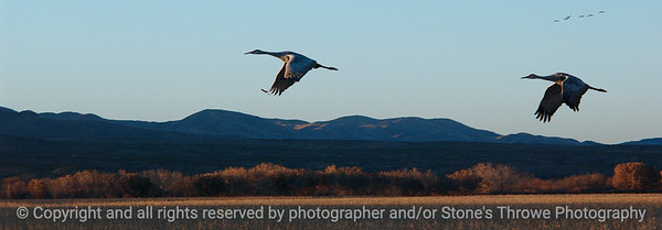 birds-bosque_del_apache_nm-01dec06-3133