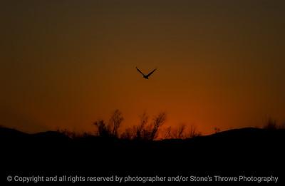 015-sunset-bosque_del_apache_nm-01dec06-12x08-218-350-9879
