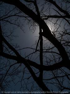 015-sunlight_tree_limbs-wdsm-11apr16-09x12-001-7466