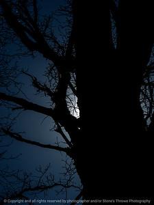 015-tree-wdsm-11apr16-09x12-001-7474