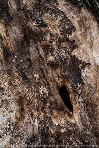 015-tree_detail-wdsm-09nov14-12x18-004-0647