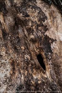 015-tree_detail-wdsm-09nov14-12x18-004-0647