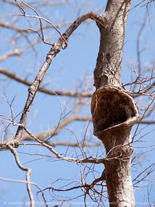 015-tree_detail-wdsm-11apr16-09x12-201-7480