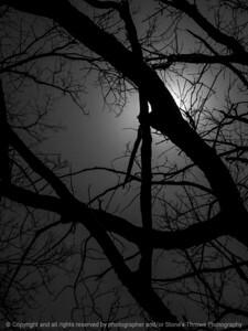 015-sunlight_tree_limbs-wdsm-11apr16-09x12-001-bw-7466