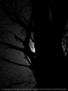 015-tree-wdsm-11apr16-09x12-001-bw-7474
