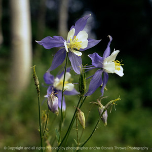 015-flower-colorado-xxaug82-1506