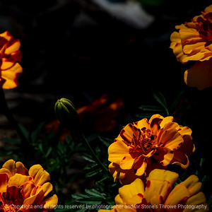 015-flower-ankeny-19aug19-03x03-006-500-2953