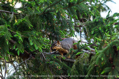 015-squirrel-ankeny-13may19-09x06-009-350-0363