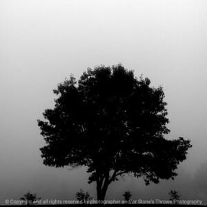 015-fog-ankeny-13nov17-09x09-006-bw-2679