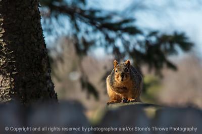 015-squirrel-ankeny-04mar20-12x08-008-400-5732