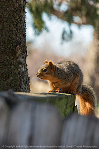 015-squirrel-ankeny-04mar20-08x12-008-400-5690