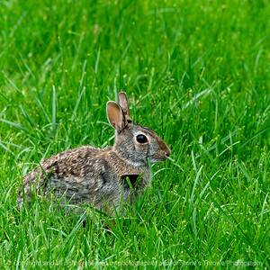 015-rabbit-ankeny-22may20-03x03-006-400-6564