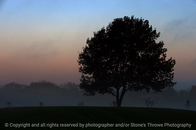 tree_fog-ankeny-03nov15-18x12-003-5772