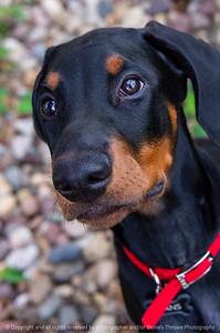 015-dog_hans-ankeny-24aug19-08x12-008-500-2985