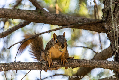 015-squirrel-ankeny-27aug19-12x08-400-3039