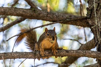 015-squirrel-ankeny-27aug19-12x08-400-3039