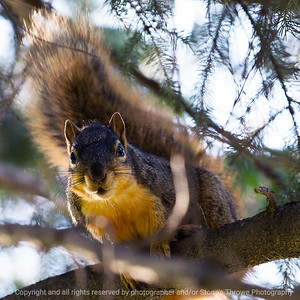 015-squirrel-ankeny-13may19-03x03-006-350-0384