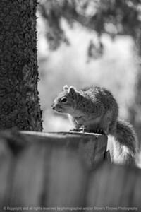 015-squirrel-ankeny-04mar20-08x12-008-400-bw-5690