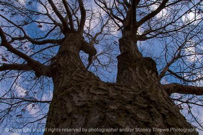 tree-ankeny-06mar16-18x12-003-6953
