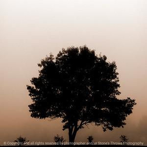 015-fog-ankeny-13nov17-09x09-006-sepia-2679