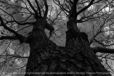 tree-ankeny-06mar16-18x12-003-bw-6953