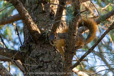 015-squirrel-ankeny-27aug19-12x08-008-500-3060