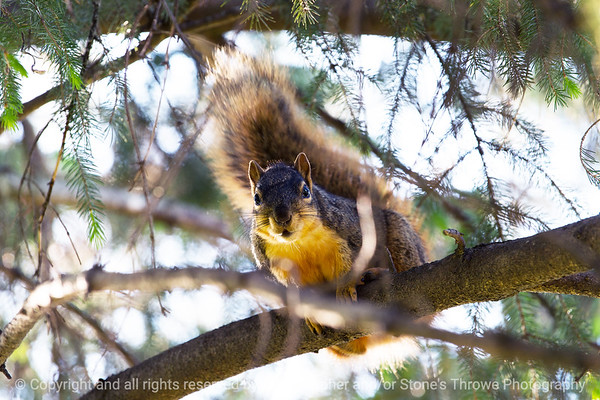 015-squirrel-ankeny-13may19-09x06-009-350-0384