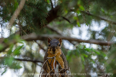 015-squirrel-ankeny-13may19-09x06-009-350-0429