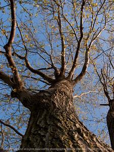 015-tree-ankeny-22apr16-09x12-001-7839