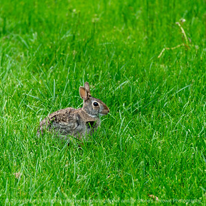 015-rabbit-ankeny-22may20-09x09-006-400-6564